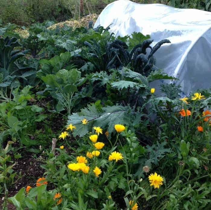 Permaculture polyculture examples