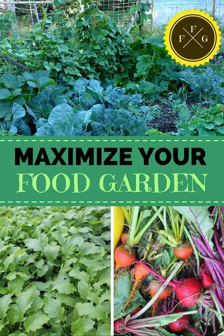 Maximize Your Food Garden and Get More Yield with these Methods!