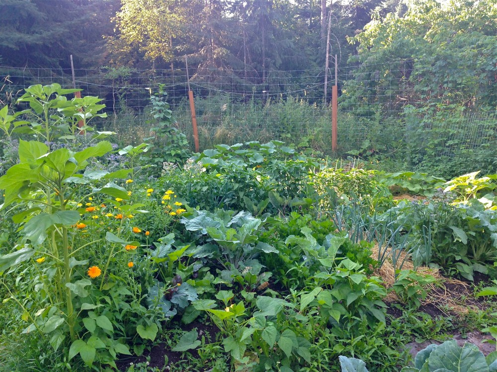 Beautiful Vegetable Gardeni