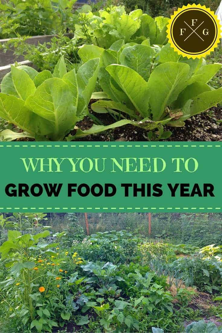 Some big reasons why you should be trying to grow more of your own food!