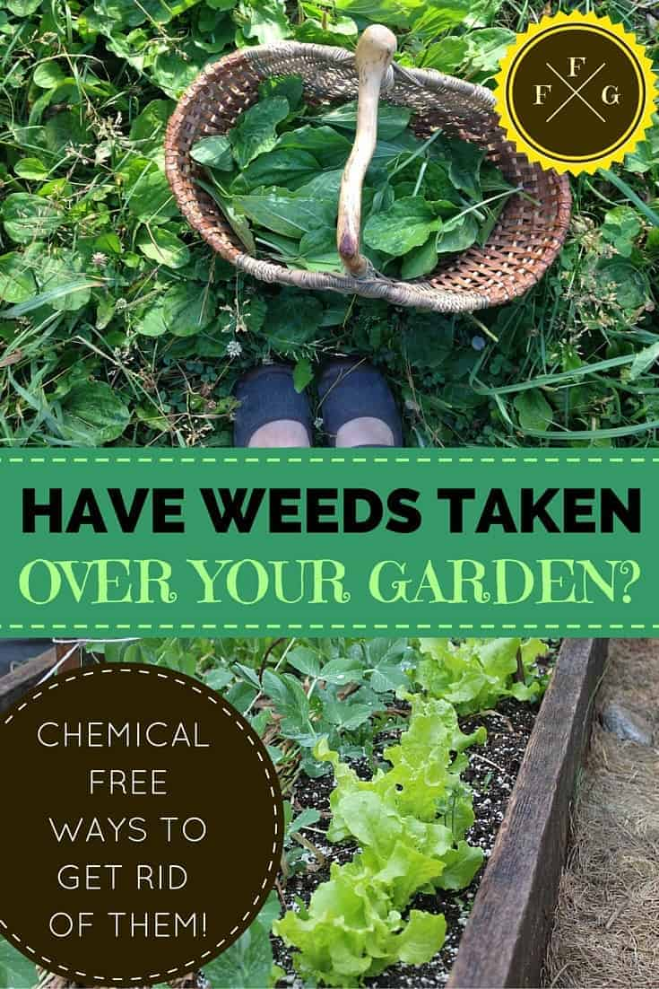 Best ways to get rid of weeds without the use of chemicals