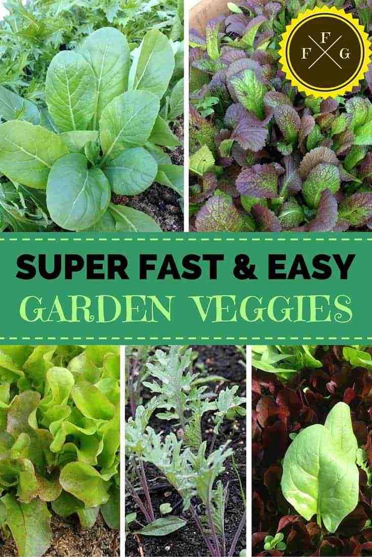 Grow fast and easy veggies to get the most from your garden!
