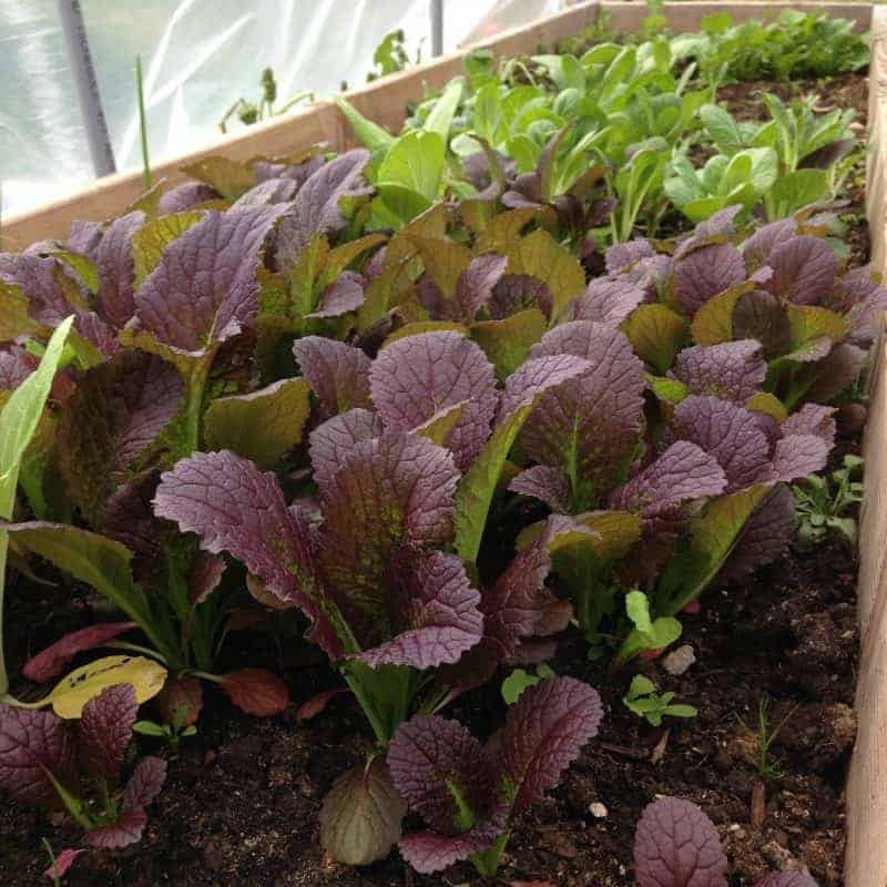 Get More from your Garden with Bumper Crops