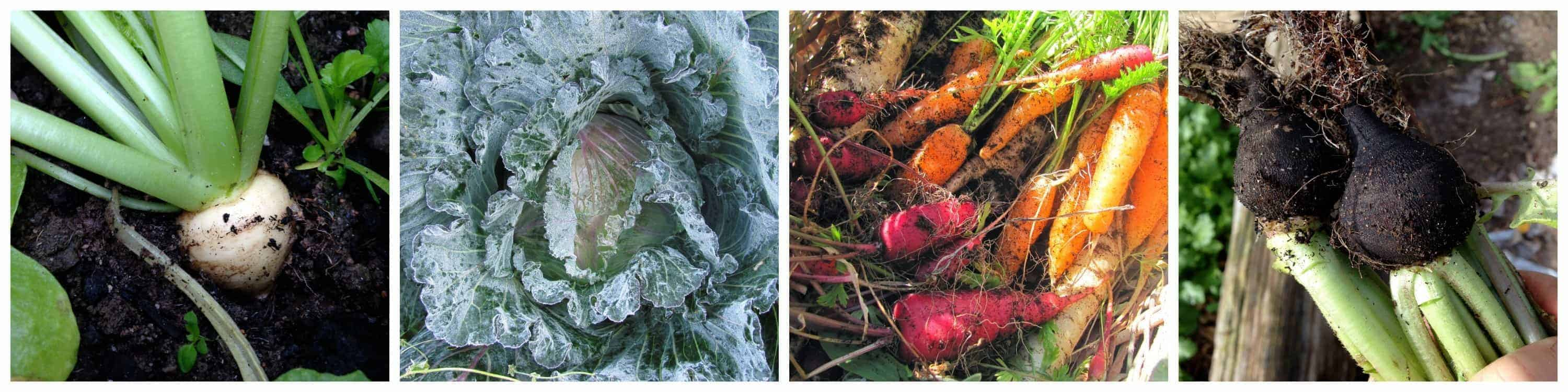 Winter-Gardening-Cold-Hardy-Vegetables