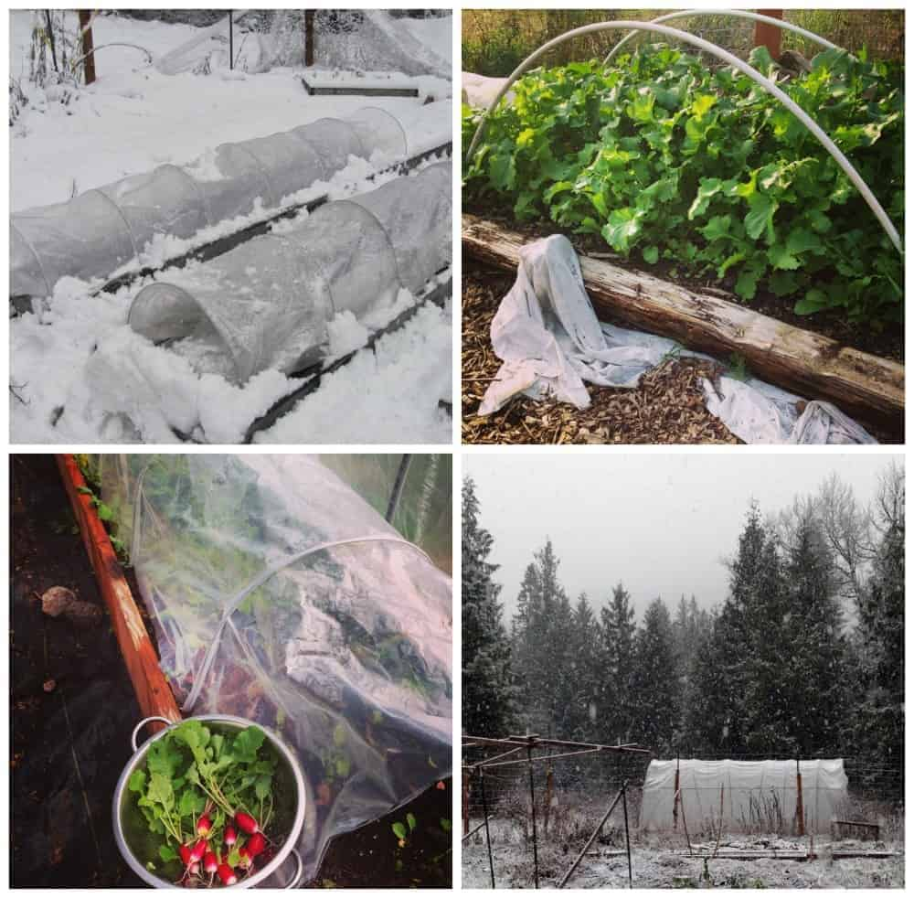 Season extenders for fall & winter gardening