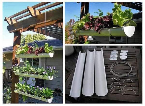 Vertical Gardening: Gutter Gardening