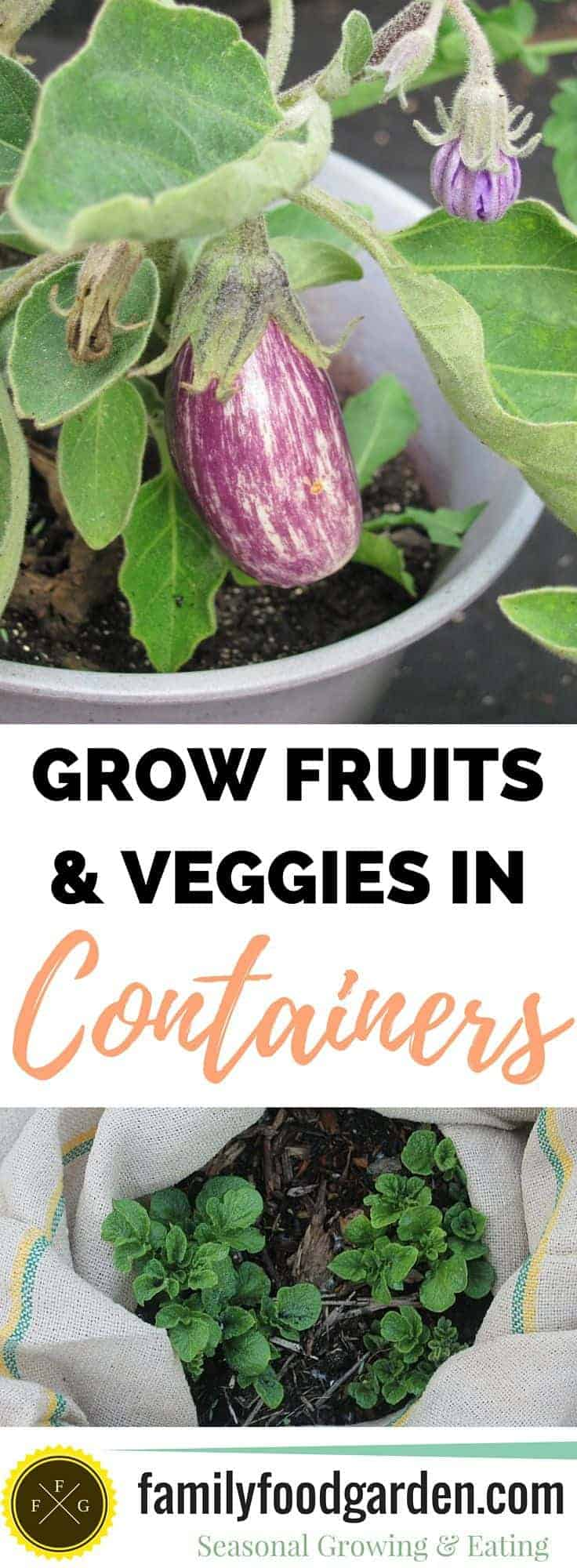 20 Fruits Vegetables You Can Grow In Containers
