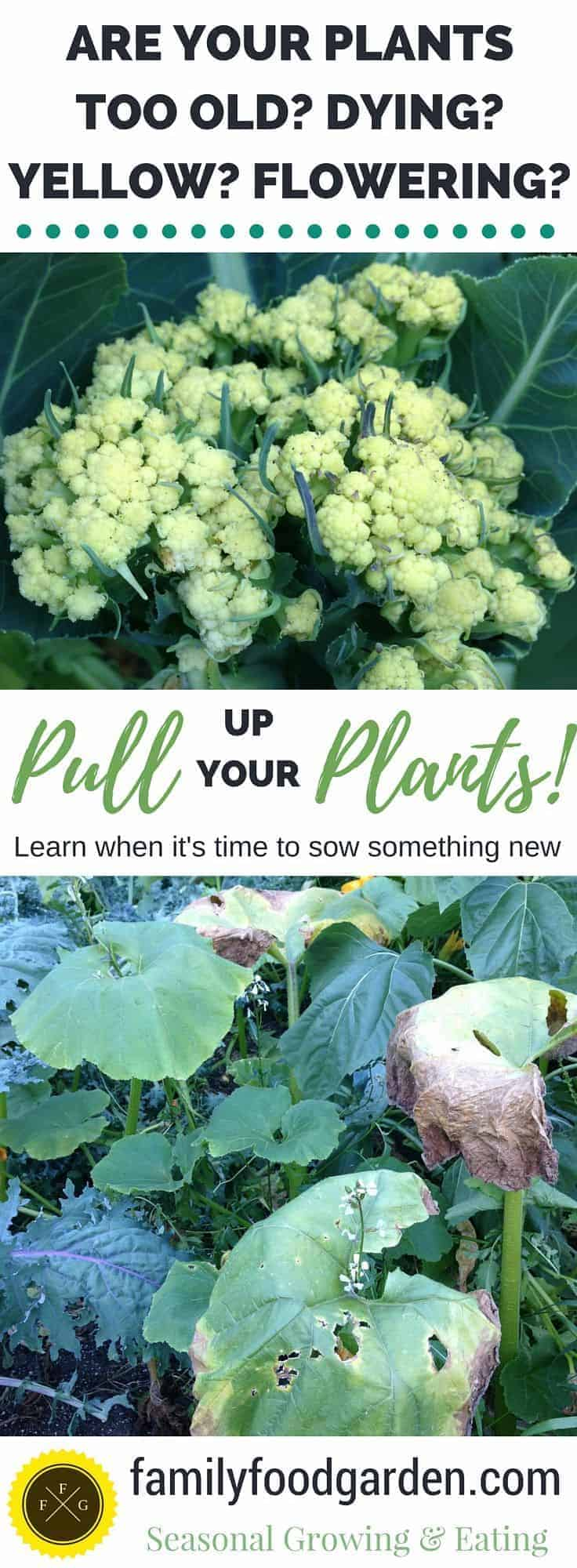 Learn when you can save a plant or when it's time to pull it up and sow new crops