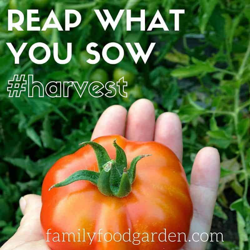 Garden Better: Reap what you Sow