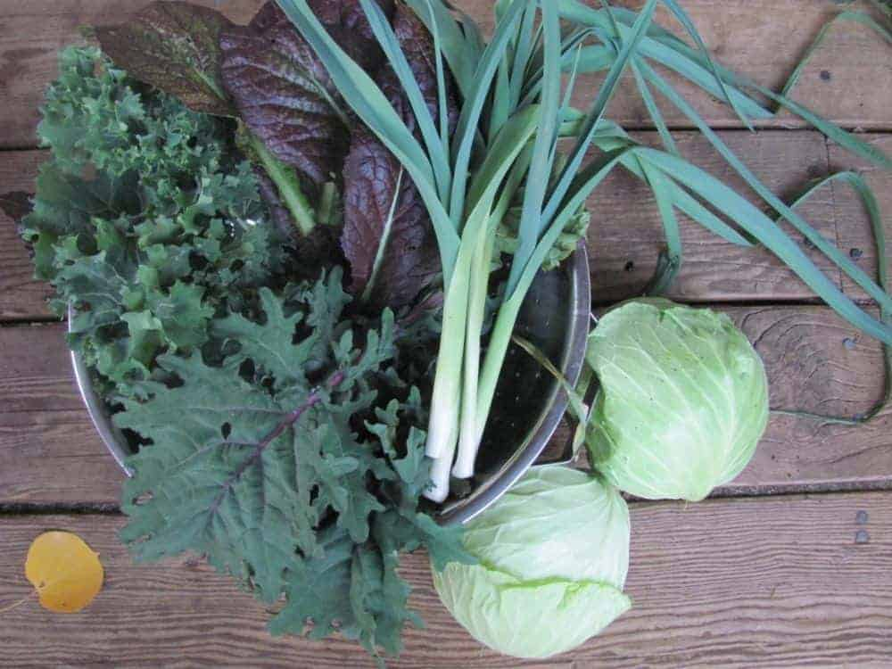 30 Crops to Plant in Summer for a Fall Harvest