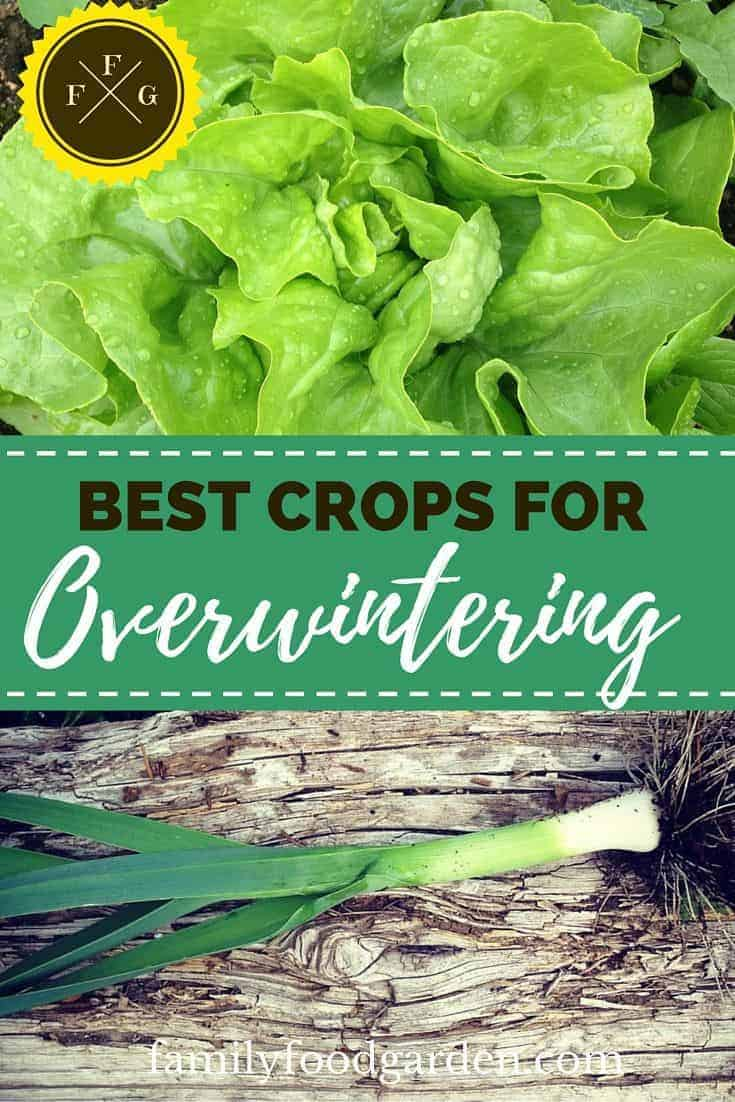 Tips and list of crops for overwintering in zone 5
