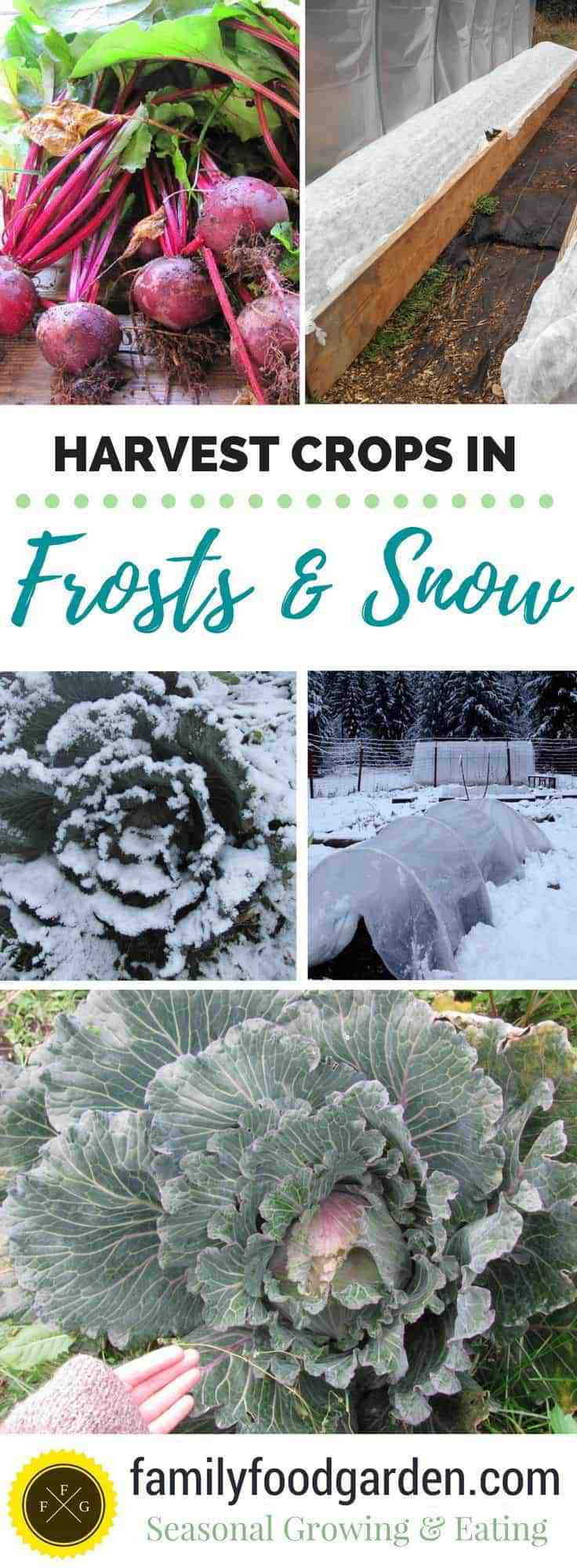 Best cold hardy crops tp harvest in snow or after frosts
