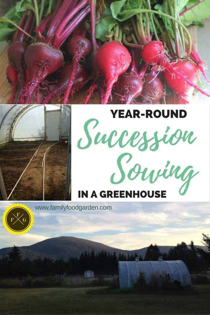 Vegetable Garden Planning: Succesion Sowing in a Greenhouse