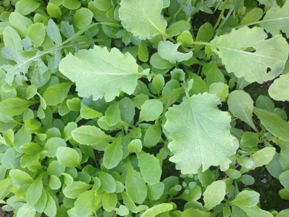 What are Seeds & What are Weeds?