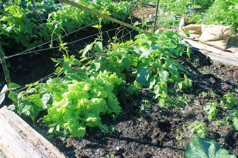 Garden Planning: How Much to Plant?