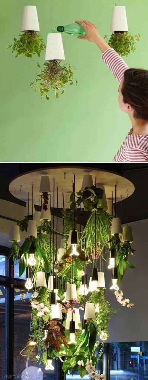 Upside down indoor plants