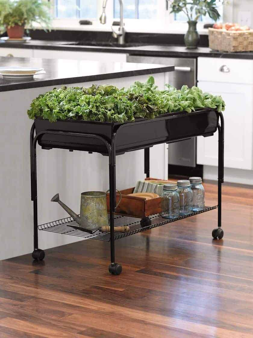 Mobile Salad Garden for Indoor Gardening