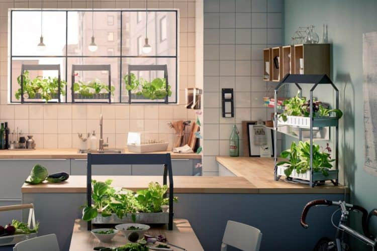 Indoor Gardening: Modern & Innovative Ways to Grow Food Inside