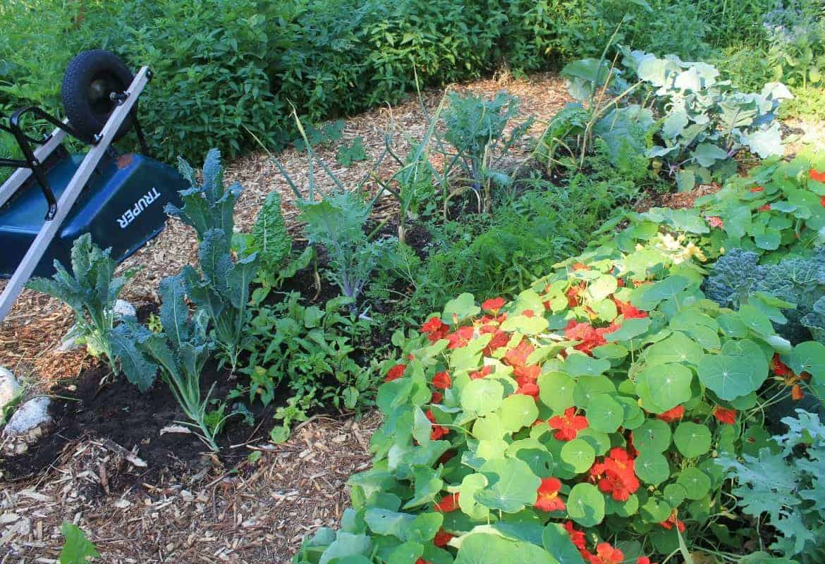 Garden Planning in 5 Easy Steps