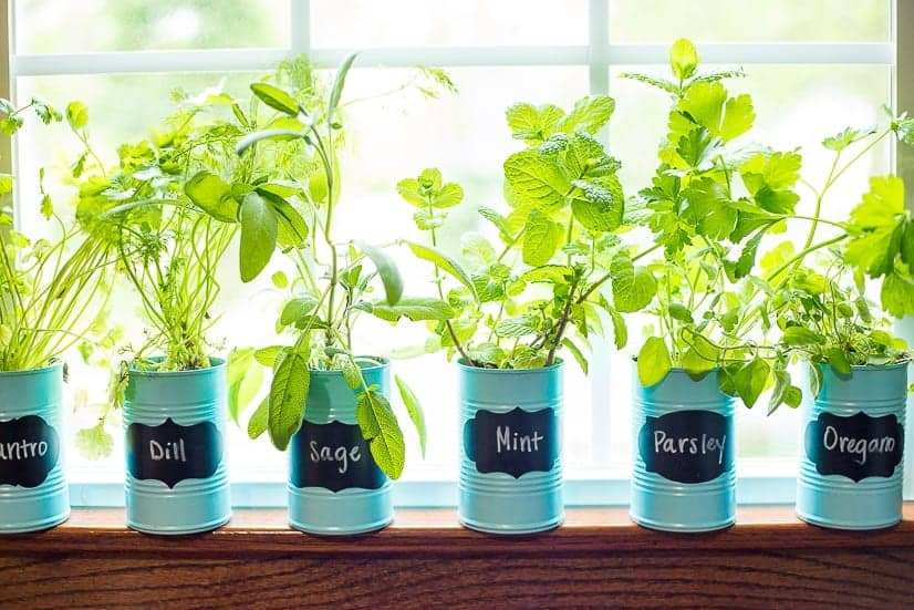 Beautiful Container Herb Gardens