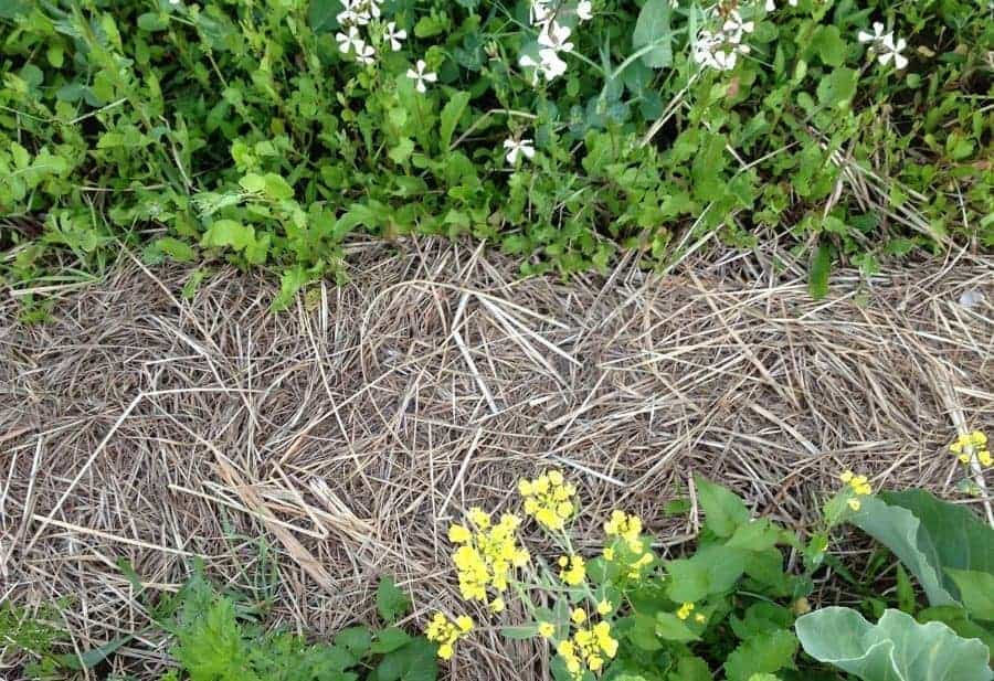 Mulching with clay soil
