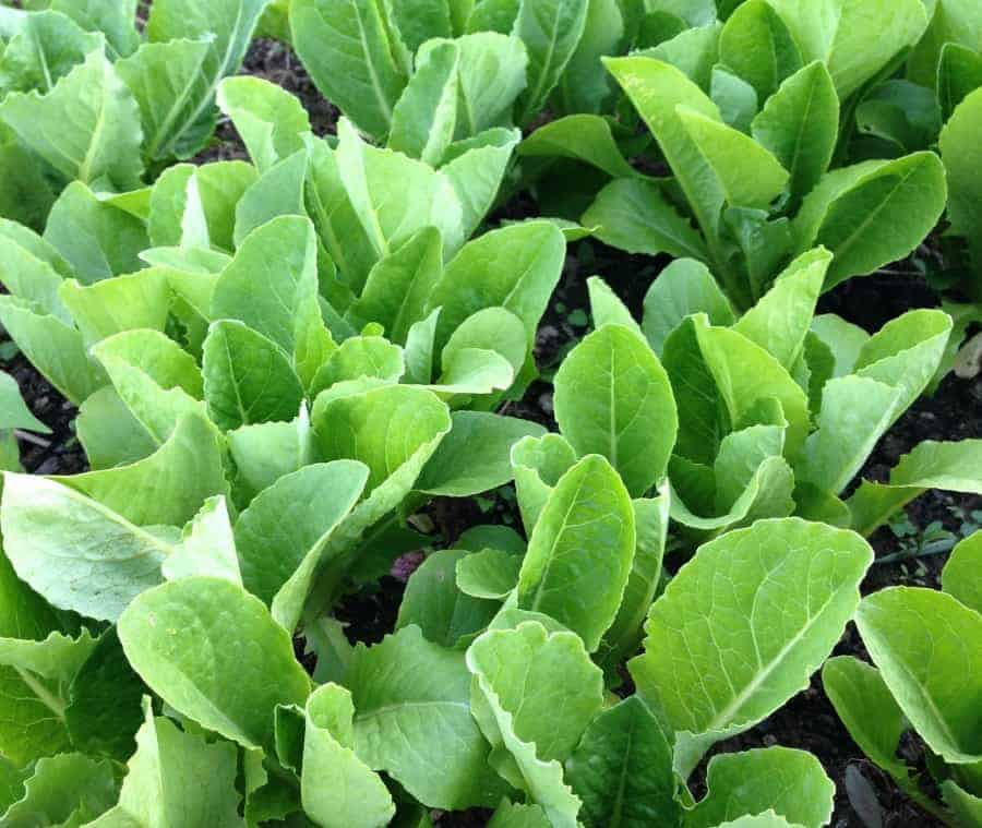Best crops to grow in clay soil