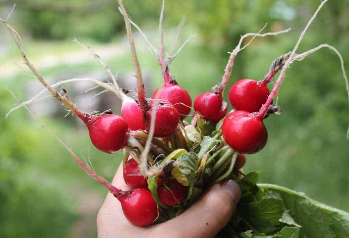 The Easiest (& Hardest) Crops to Grow in your Garden