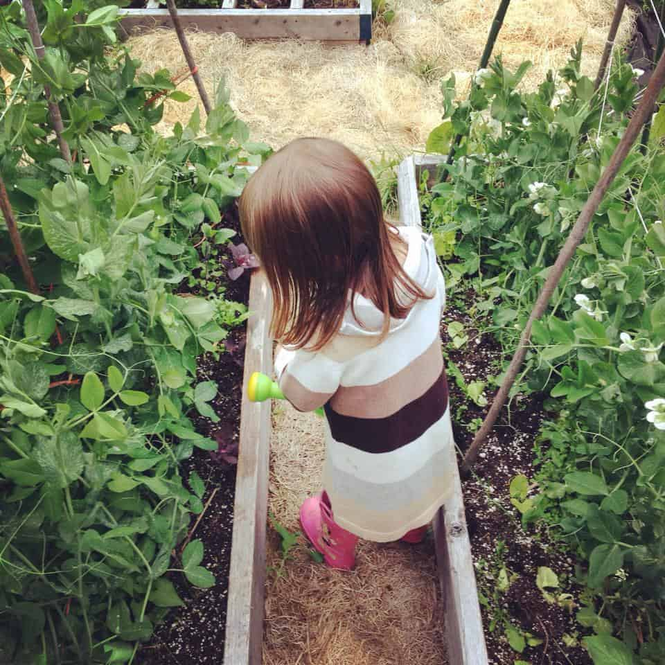Beautiful Blog on Family Gardening with Kids