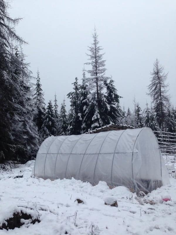polytunnel greenhouse in the snow