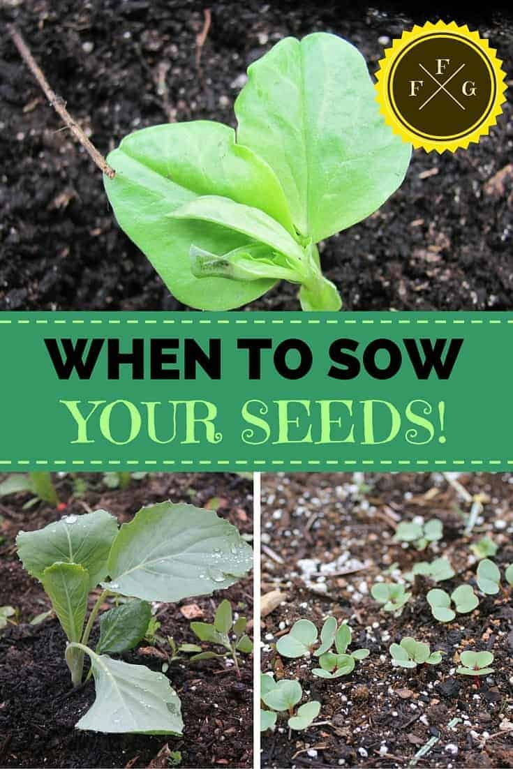When to sow your seeds (either by direct seeding or transplanting)