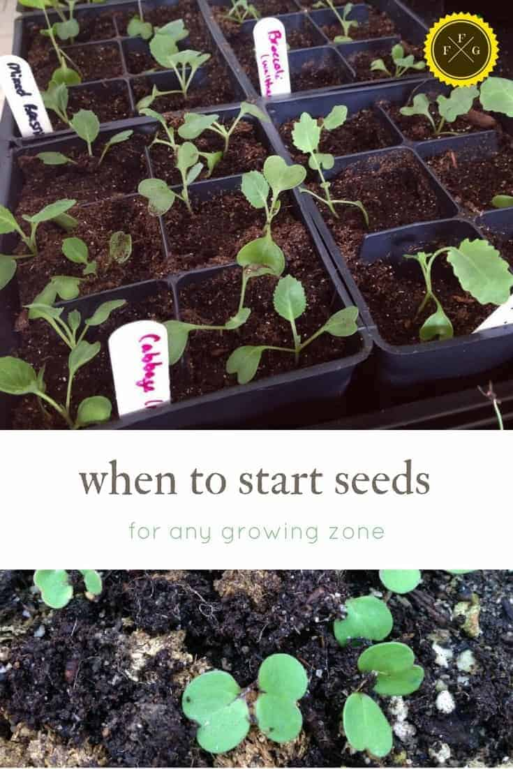when to start seeds? Count back from your spring frost dates to learn when to sow in any climate