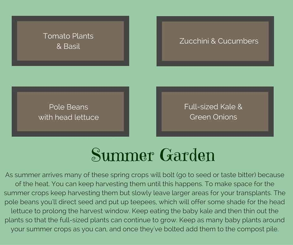 Plant list for a summer raised vegetable garden
