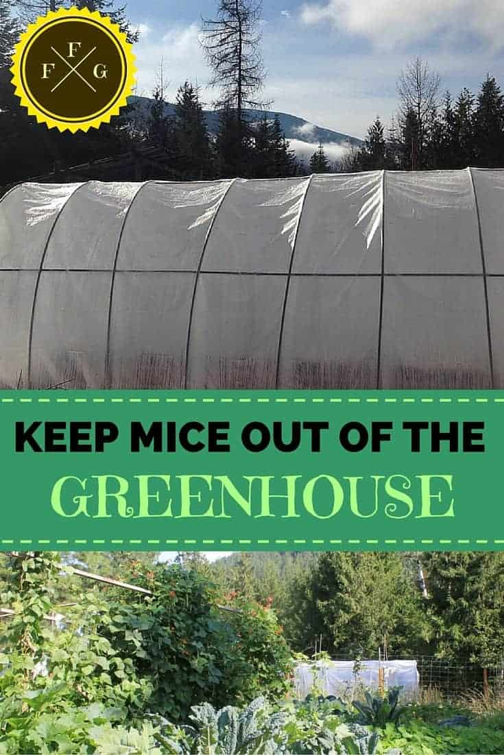 Deter Mice Out Of The Greenhouse Garden Family Food Garden