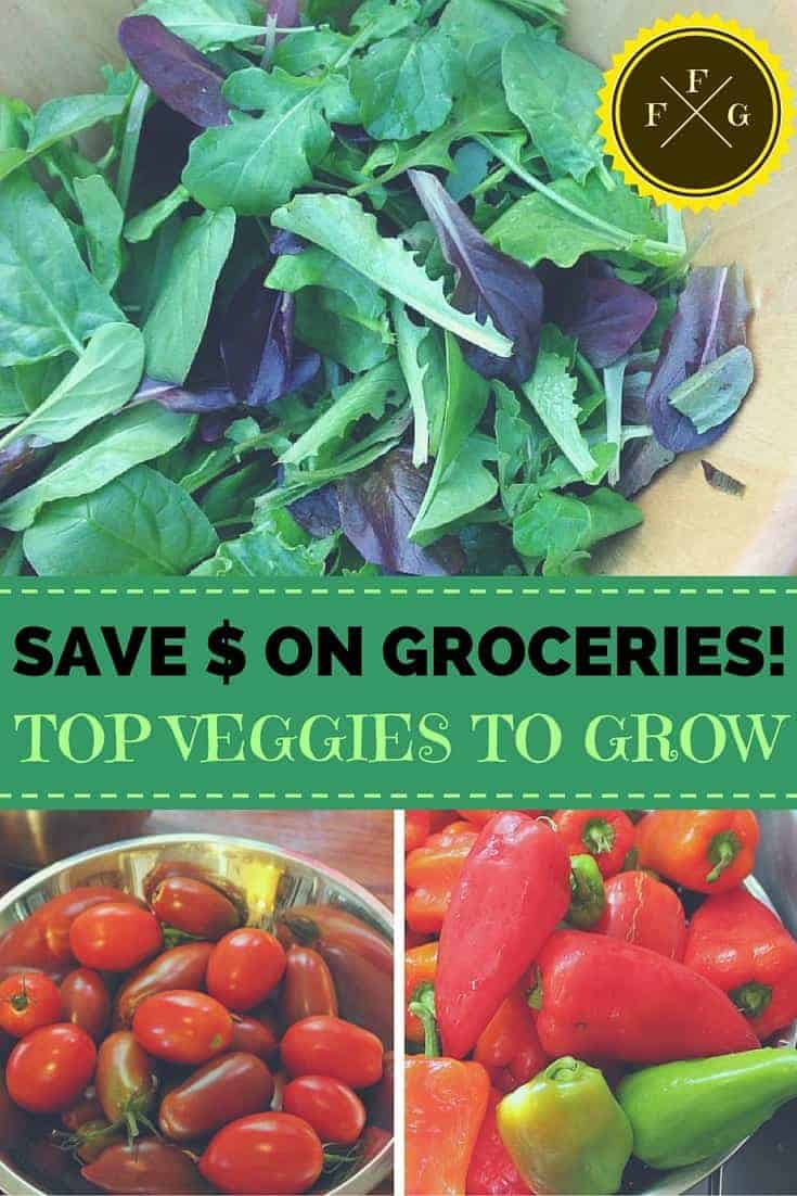 Best veggies to grow to reduce some of your produce grocery spending