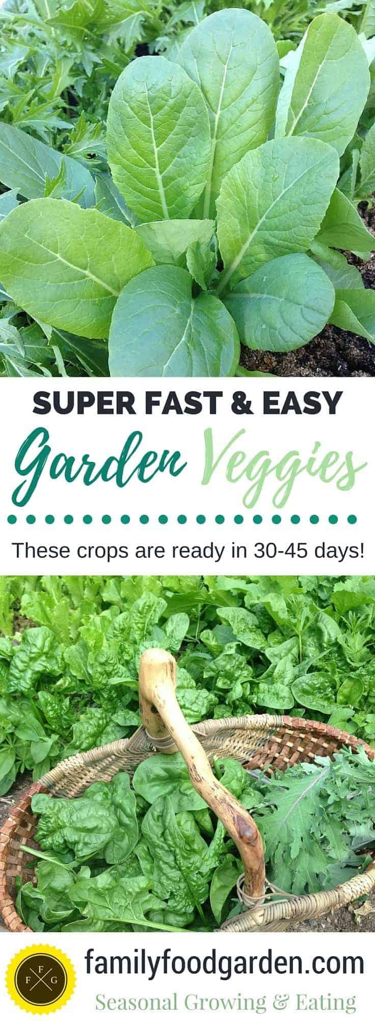 Ready in 30-45 days! These veggies are also super easy and fast to grow
