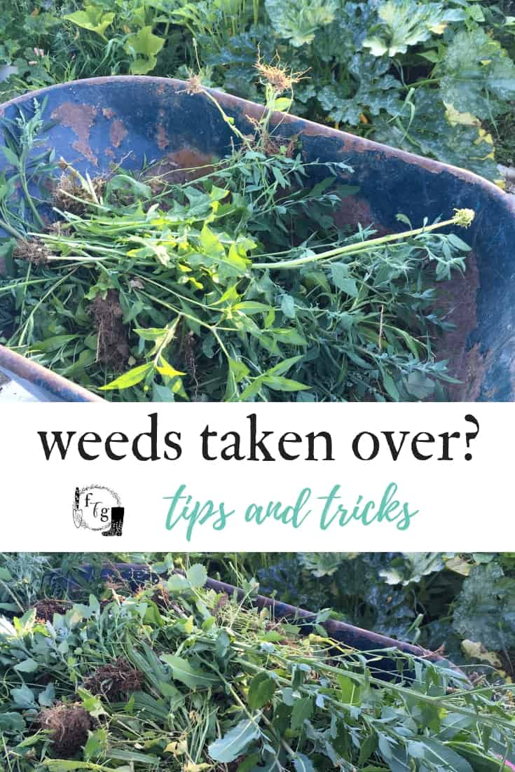 Get rid of weeds in the garden when they've taken over