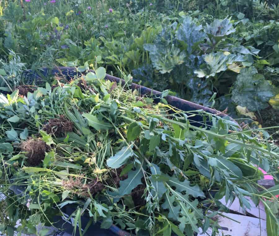 What To Do When Weeds Have Taken Over Your Garden Family Food Garden