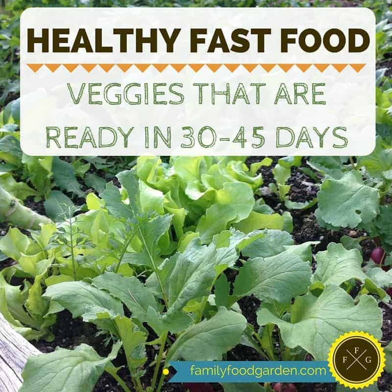 Healthy Fast Food- Veggies that are ready in 30-45 days