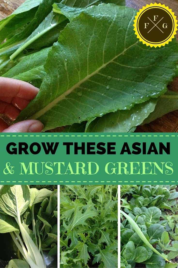 Healthy Fast Food! Grow these 5 asian/mustard greens