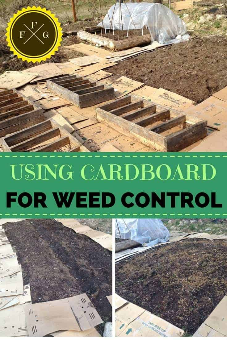 How to suppress weeds in your garden with cardboard