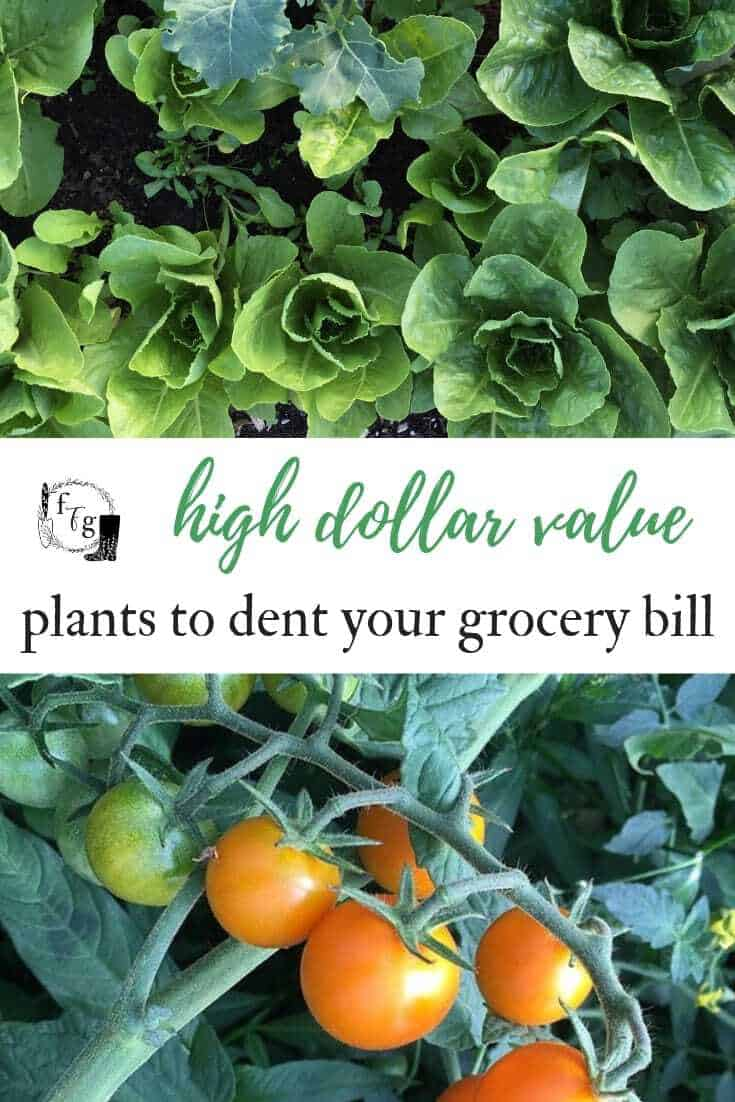 Grow a high dollar value garden