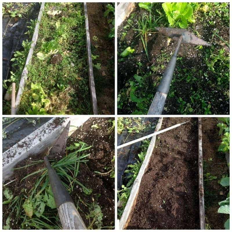 How to hoe out your garden weeds
