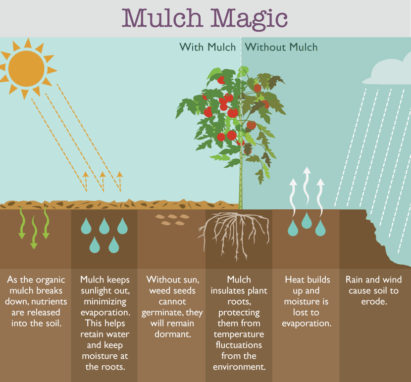 How to control weeds naturally with mulch