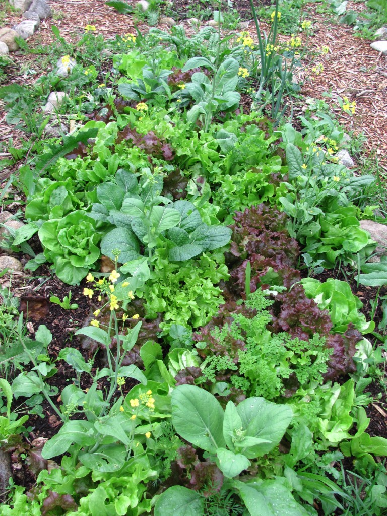 Permaculture What Is Polyculture Family Food Garden