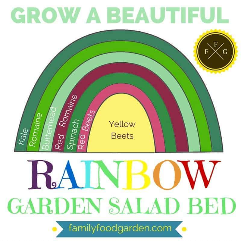 Grow a beautiful rainbow garden salad bed!