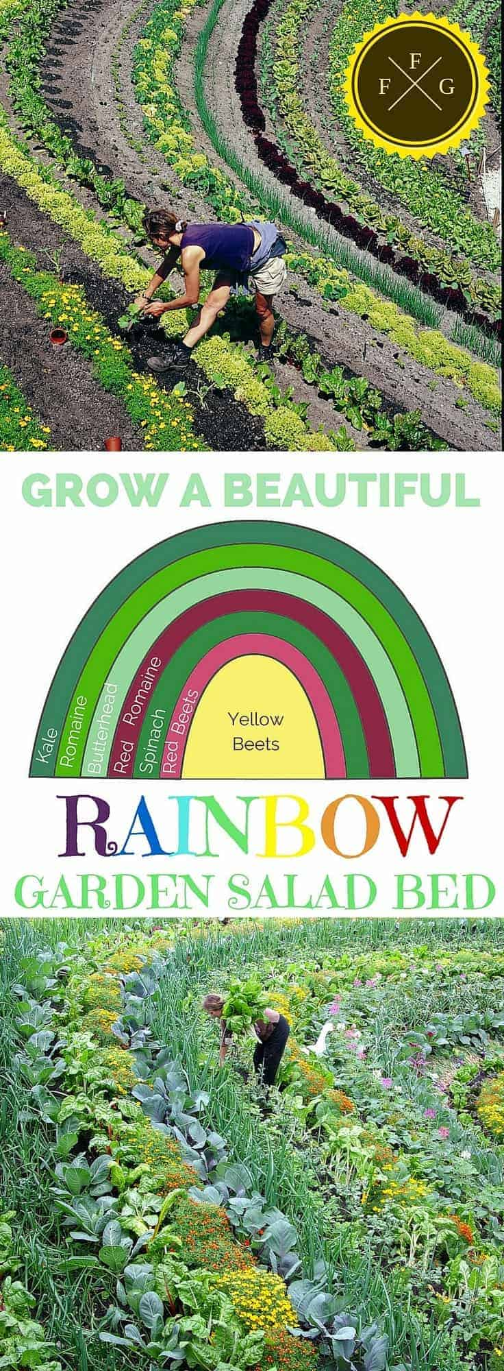Edible Landscaping! Grow a beautiful garden salad rainbow! Healthy and pretty.