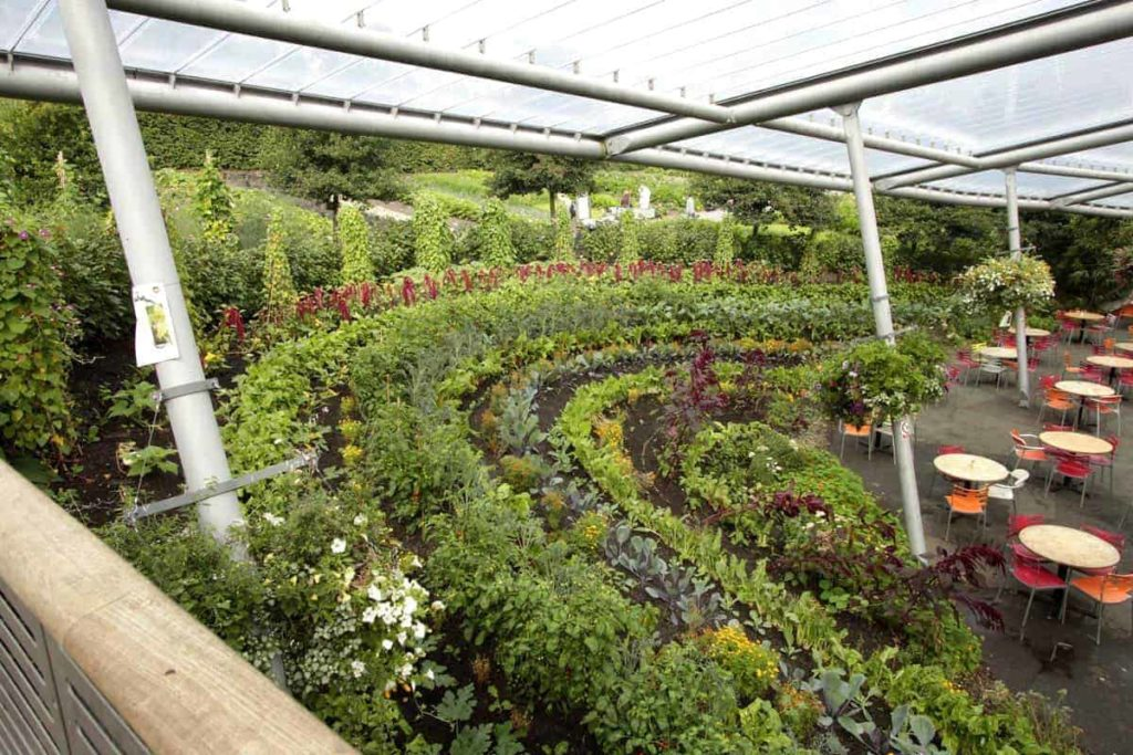 Beautiful edible landscaping with a rainbow garden bed