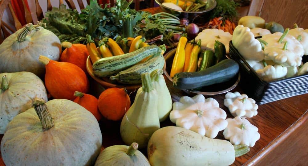 Bountiful Harvests with a High-Yield Vegetable Garden