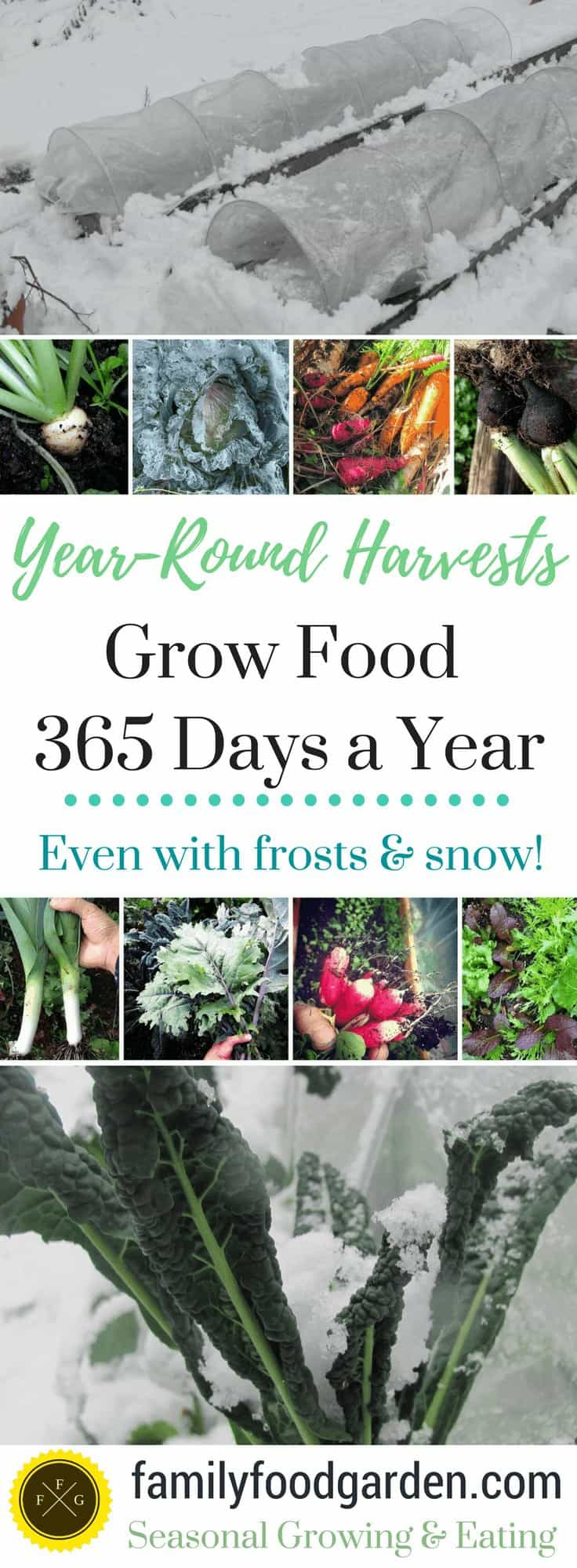 How to grow food year-round