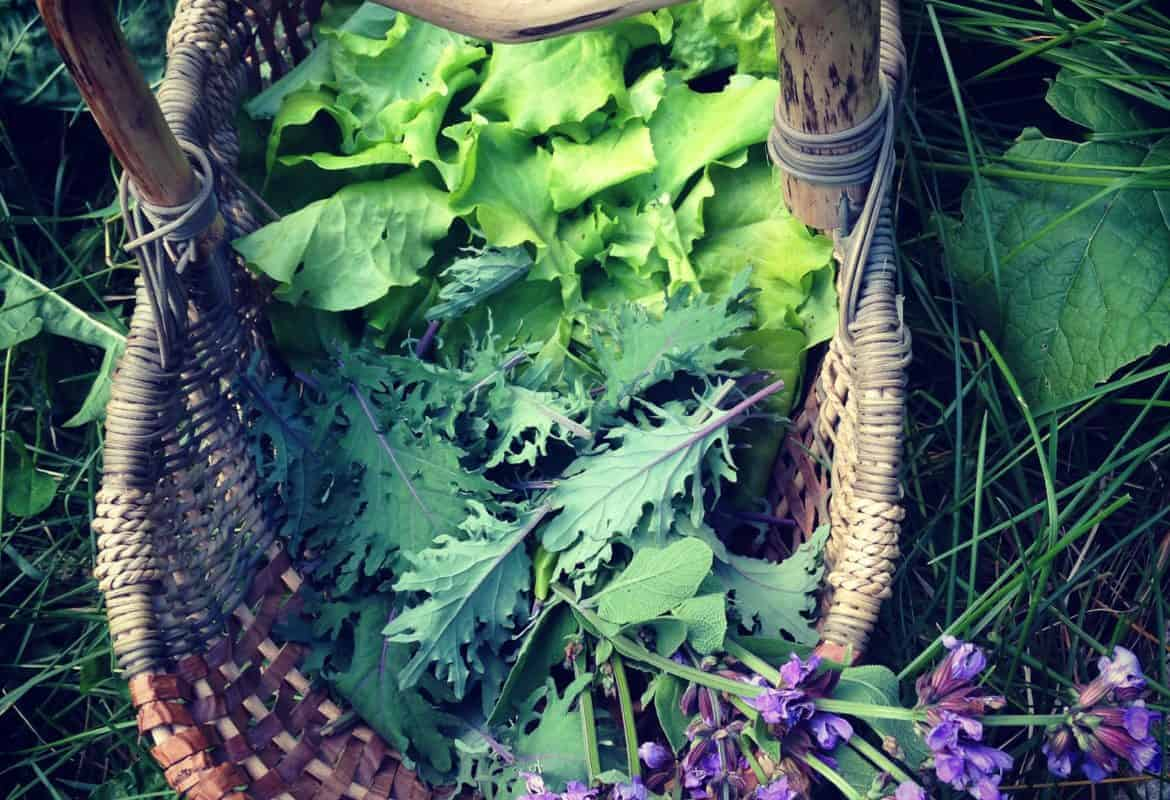 Learn How to Eat In Season (a Garden Challenge!)